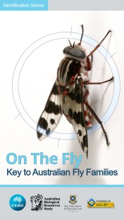 On the Fly - An interactive identification tool for Australian flies