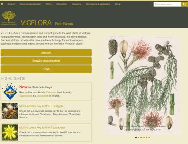 Vicflora Lucid keys