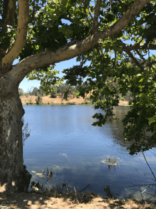 A breath of fresh air at the lakeside in Santa Margarita Lake, CA