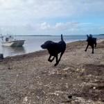 Dory and Schooner Keys Boat Tours