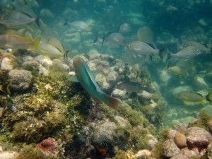 snorkeling Newfound Harbor with Keys Boat Tours