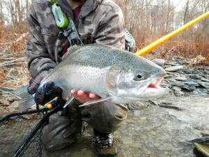 A beautiful Elk Creek hen caught with Erie steelhead guide Patrick Campbell of FOMoutfitters.