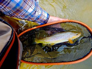 larger fish are on the banks. wade carefully and cast softly