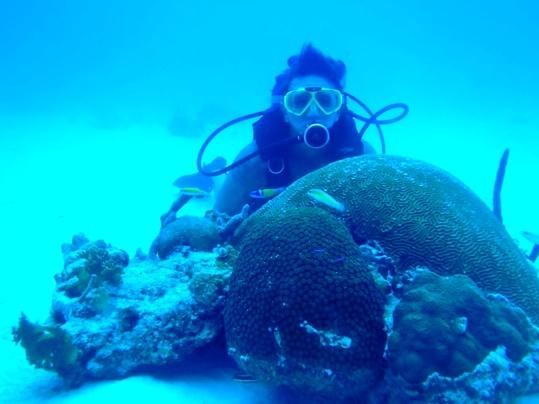 Dive Report: Rough Seas &High Vis   Florida Keys Weekly
