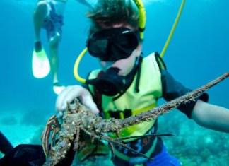 A person swimming underwater - Scuba diving