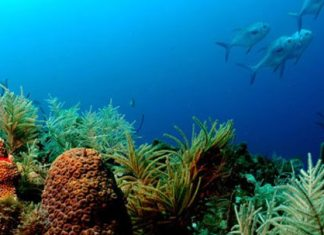 #News: Sanctuary fight comes to chambers, city commissions - Underwater view of a swimming pool - Florida Keys National Marine Sanctuary