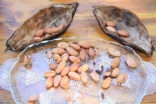 Each pod carries 30 to 50 beans and to make chocolate. The beans are fermented, roasted, ground and turned into paste. 'The whole process is pretty incredible,' said Gilbert.
