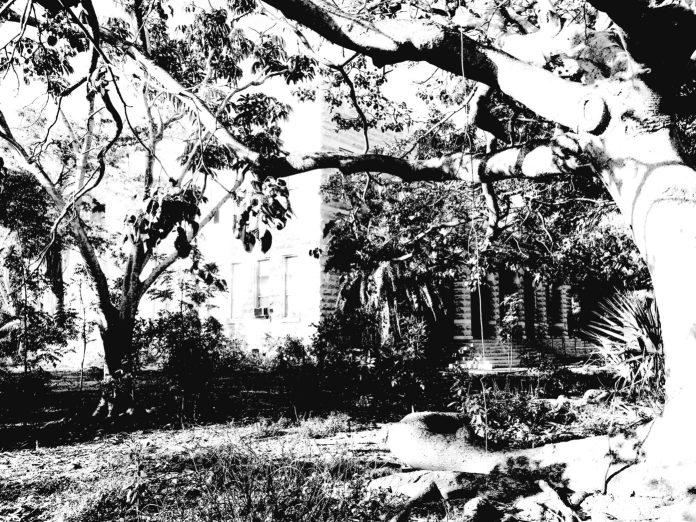 Proud landmark now a shambles - A close up of a tree - Florida Keys