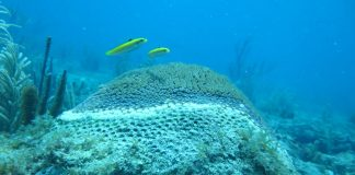 Mystery coral disease is named – 'Stony Coral' continues to spread in the Keys - A fish swimming under water - Coral reef