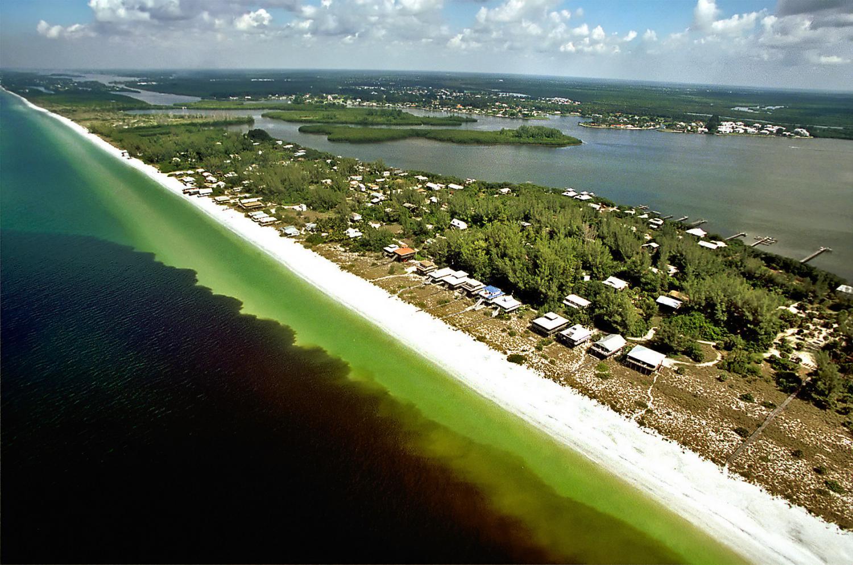 Algae Bloom And The Florida Keys Faq Florida Keys Weekly Newspapers