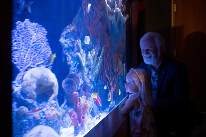 Coral exhibit opens at Keys History & Discovery Center - A person standing in a dark room - Keys History & Discovery Center