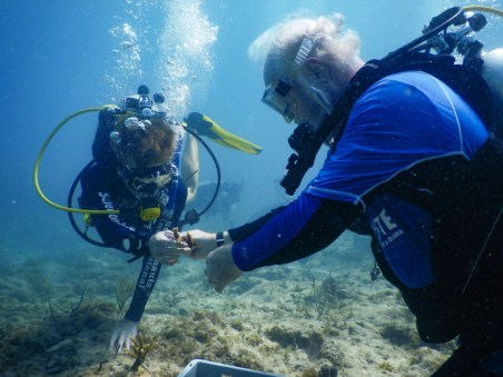 Coral Collaboration – Scientists, students and veterans join forces - A man swimming in the water - Scuba diving