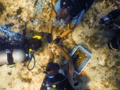 Coral Collaboration – Scientists, students and veterans join forces - A person in a swimming pool - Coral