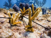 Coral Collaboration – Scientists, students and veterans join forces - Underwater view of a coral - Stony corals
