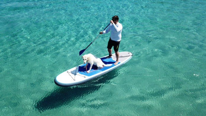 A man and dog on paddle board surrounded by blue water.