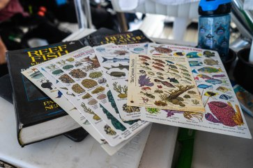 CELEBRATING CONSERVATION DECK: REEF Fest brings education, adventure - A stack of flyers on a table - Art