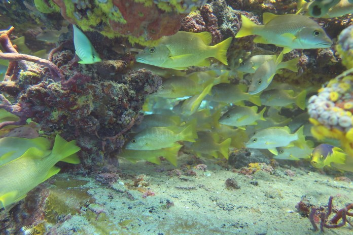 Initiative measures value of local reefs - A green underwater - Coral reef