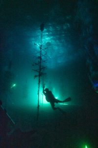 WORTH THE WAIT – CRF corals spawn later than predicted - The light is lit up at night - Nemo 33