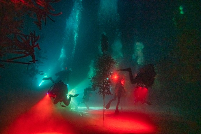 WORTH THE WAIT – CRF corals spawn later than predicted - A blurry image of a red light at night - Light