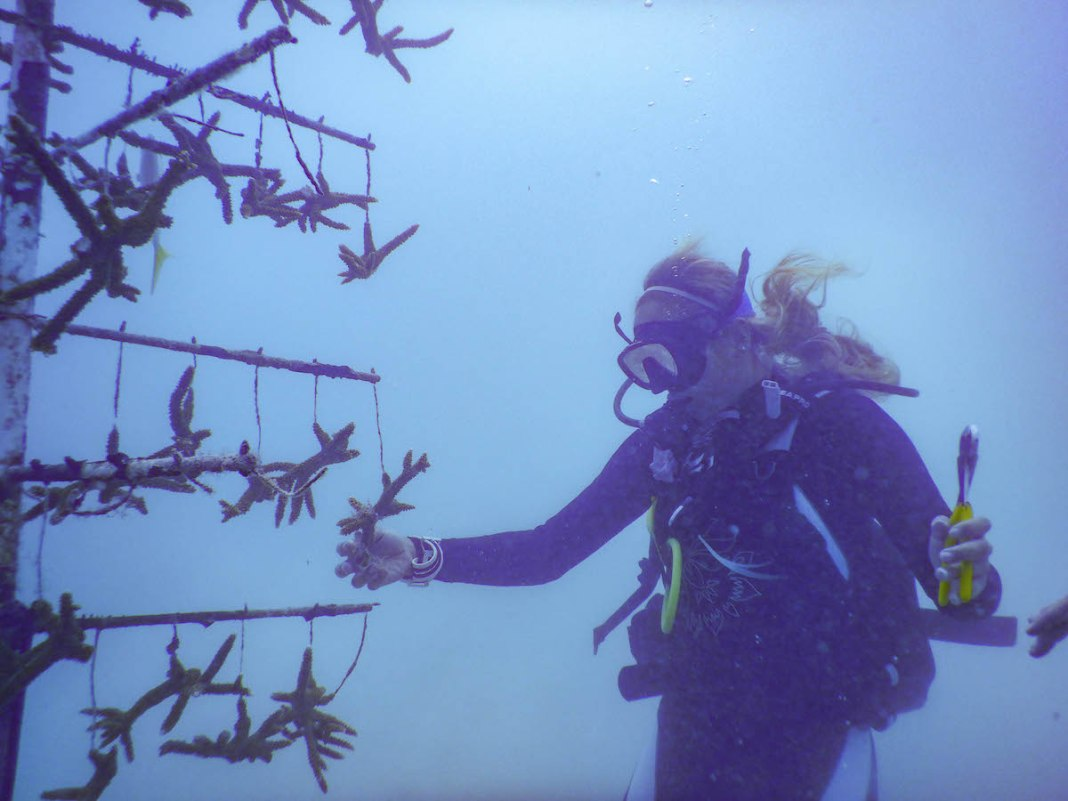 - A group of people standing in the snow - Scuba diving