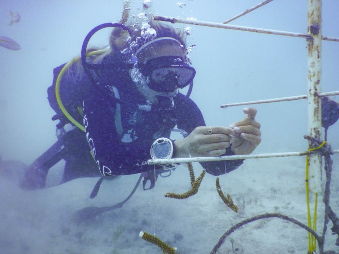 - Scuba diving
