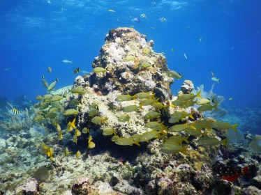 NOAA Launches $97 Million Targeted Mission to Save Florida Reef Tract - Underwater view of a large rock - Coral reef