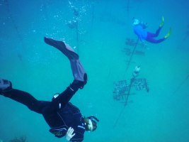 NOAA Launches $97 Million Targeted Mission to Save Florida Reef Tract - A man swimming in the water - Free-diving