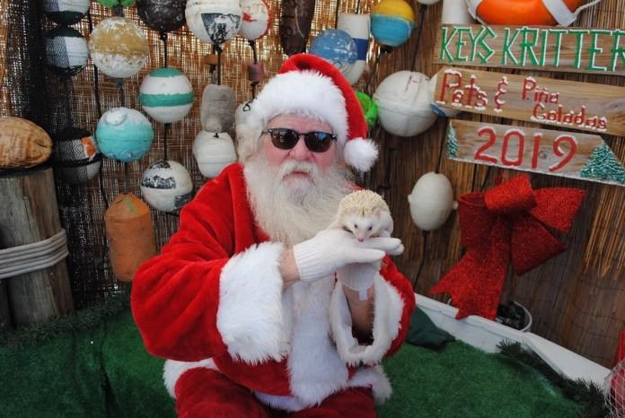 A Doggone Good Time - A group of stuffed animals - Christmas decoration