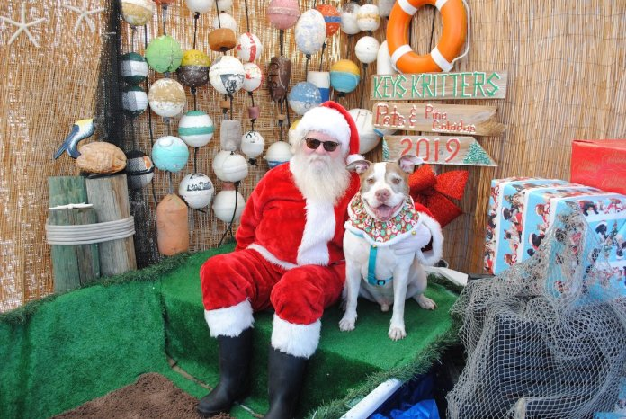 A Doggone Good Time - A group of stuffed animals on display - Christmas decoration