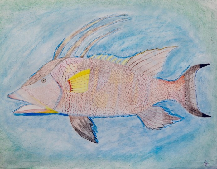 MHS students team up to raise awareness with visual storytelling - A fish swimming under water - Northern red snapper