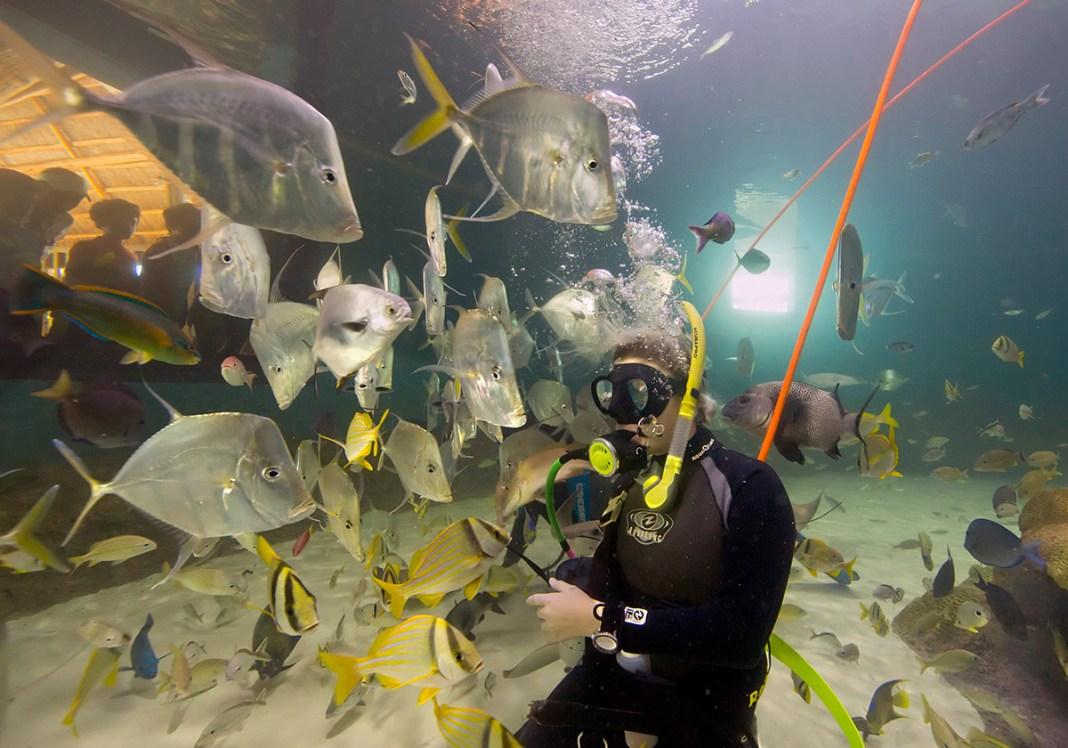 Aquarium Encounters