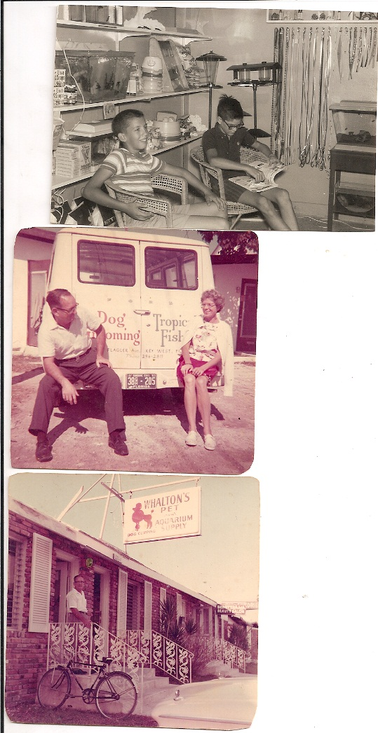 Joe and Sally returned to his native Key West in the early 60s to open an aquarium supply and dog grooming shop