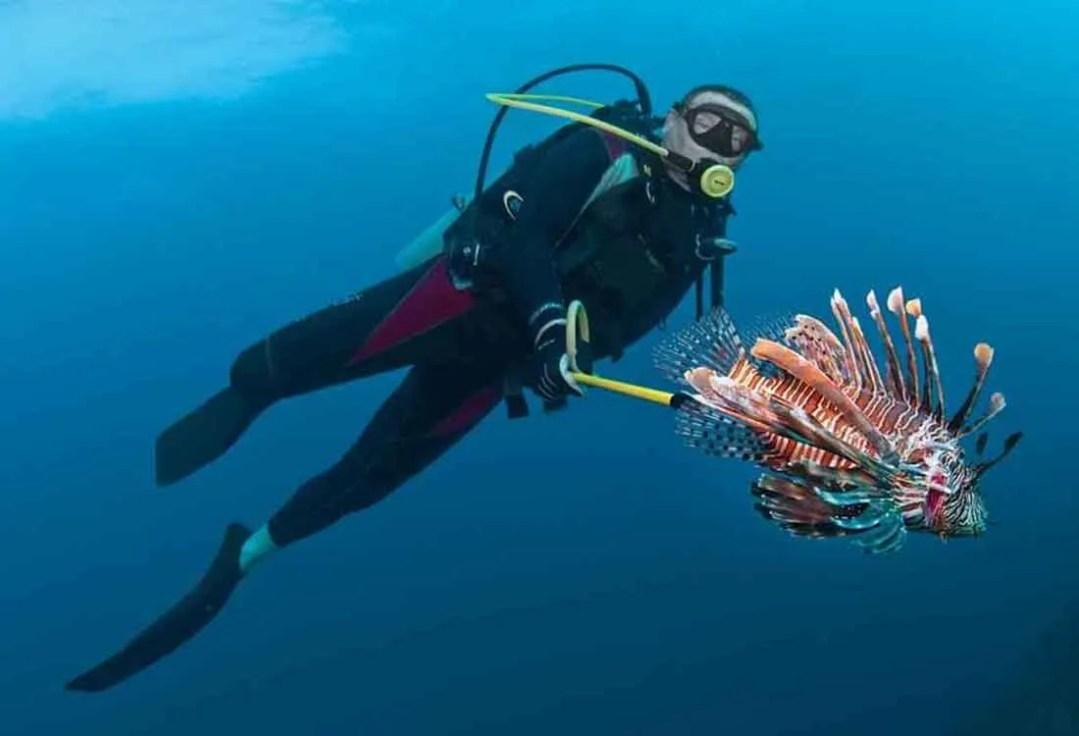 Key West Spear Fishing 2