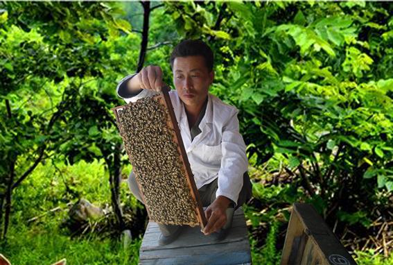 Instituto de apicultura
