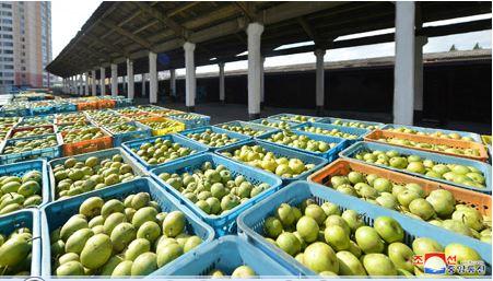 Zona frutícola de Kwail.