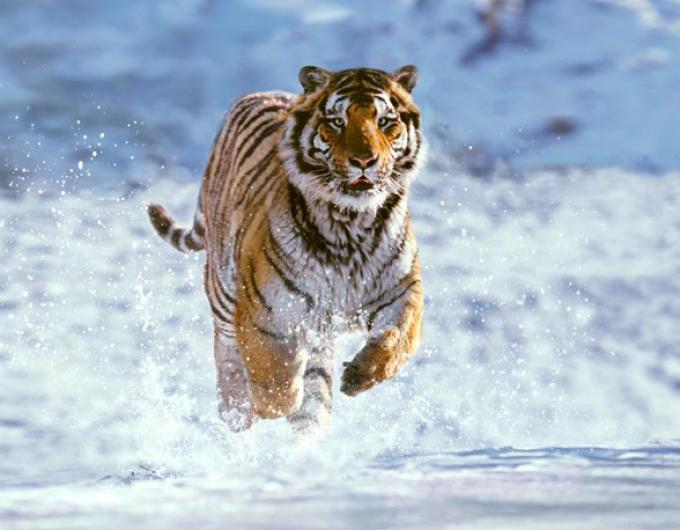 Protección de animales salvajes