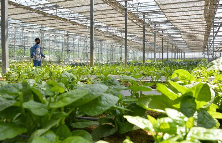 Incremento de producción de vegetales.