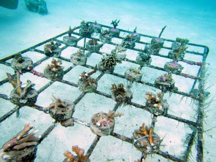 CoralDoctors_CoralFarm_Tables_4