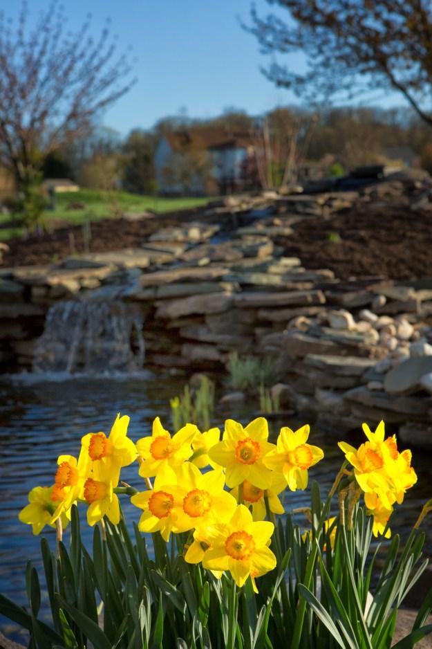 130422_Spring_Daffys&Pond by Karl Graf.