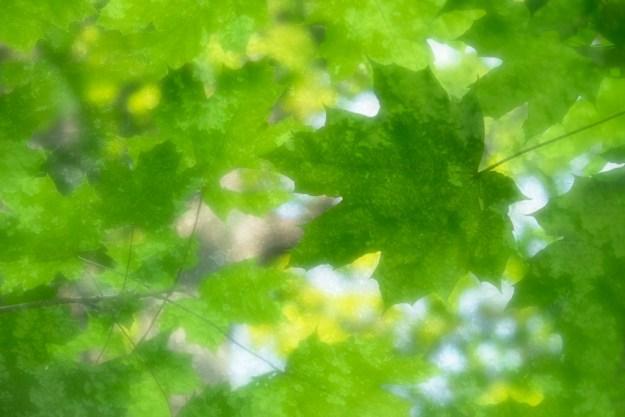 140629_Leafy Texture by © 2013 Karl Graf.
