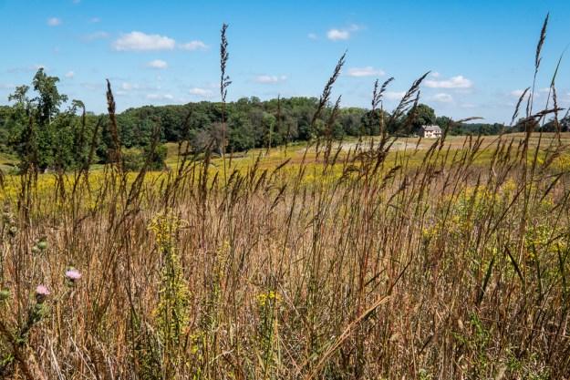 140929_Longwood Meadow #3 by .