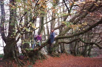 Climbing trees near Clovelly