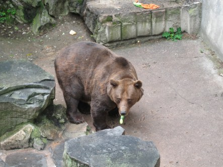 Brown bear at the castle