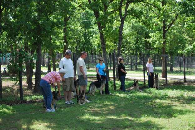 AKC Canine Good Citizen Class at Keystone German Shepherds &