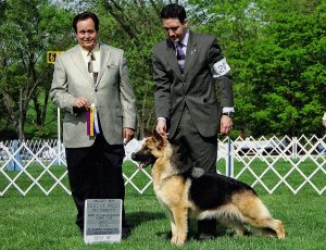 GCh. Ch. BIS Multiple-Group Winner Heidelberg's Kay at age 15 months
