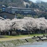 浅野川と卯辰山 ソメイヨシノ