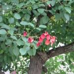 アメリカディエゴ 花と木の姿