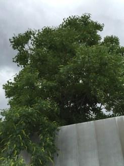 花を咲かせている木の姿