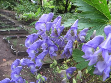 花と葉のアップ