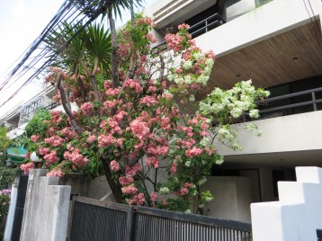 ピンクの花と白い花の様子